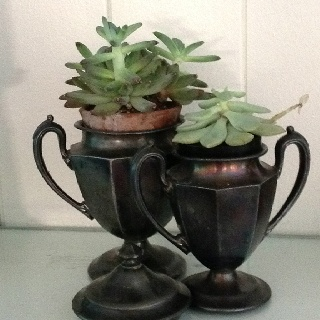First place succulents in silver…